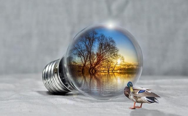 kachna u žárovky