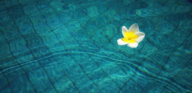 Čistý bazén se květem.jpg